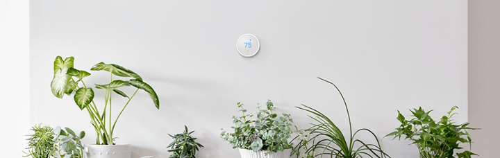 Nest Smart Thermostat hanging above a row of houseplants
