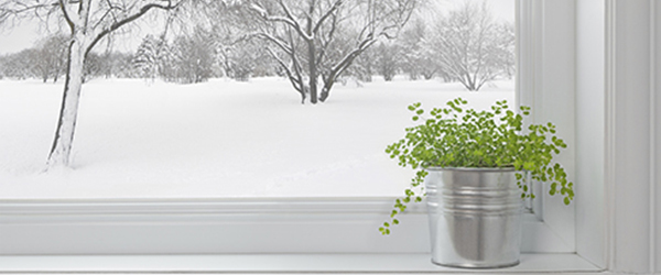 Potted plant by a snowy window