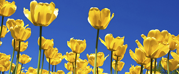 Pretty Yellow Flowers and blue sky)