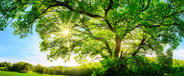 RS.EN.BG Why planting a tree can save you and the earth money_600x250 (2)